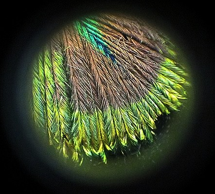 A view through the microscope