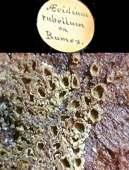 Mordecai Cubitt Cooke microscope slides