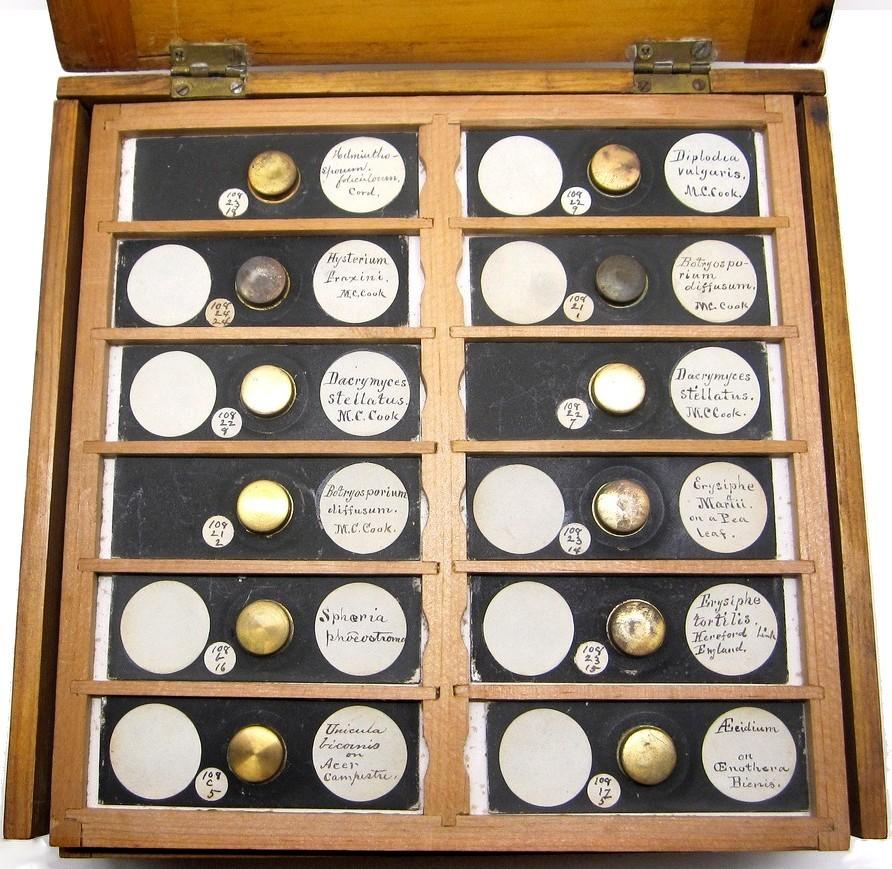 Mycology Microscope Slides