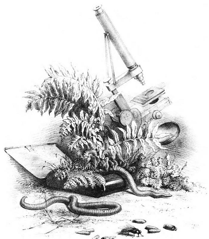 Powell & Lealand microscope