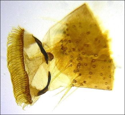 foot of a caterpillar