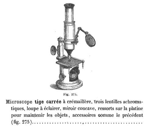 moltini catalog 1859