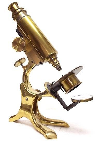 schrauer's wale-limb model microscope